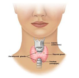 Thyroid Surgery Victoria Total Thyroidectomy Melbourne Thyroid
